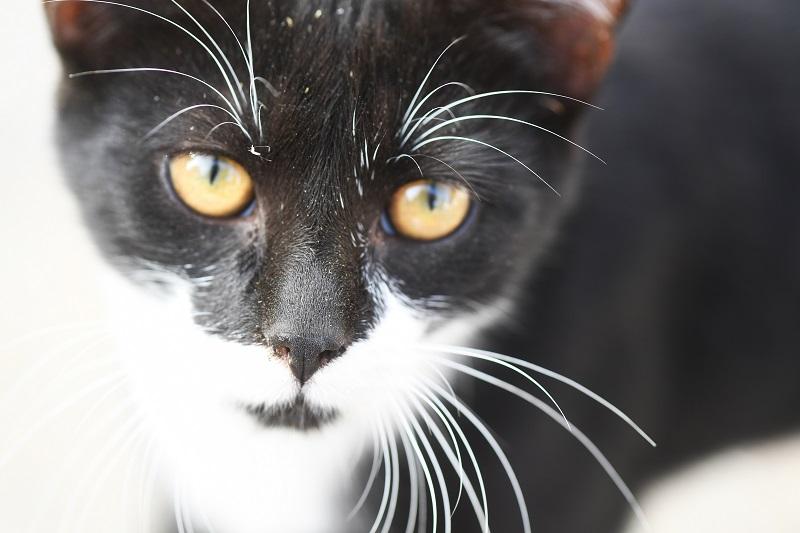 Kinesiologie für Katzen