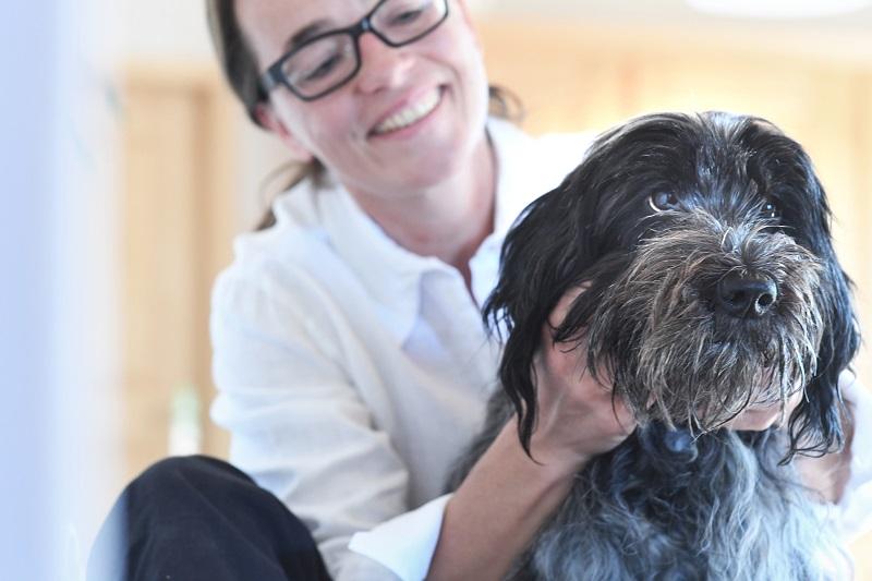 Kinesiologie am Hund
