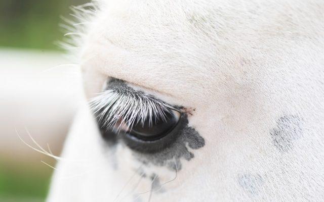 Augen sind das Tor zur Seele