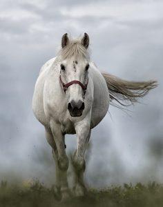 Pferden tut die Behandlung gut